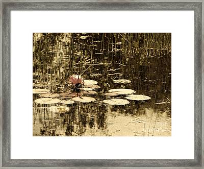 Summer Afternoon Framed Print by Marcia Lee Jones