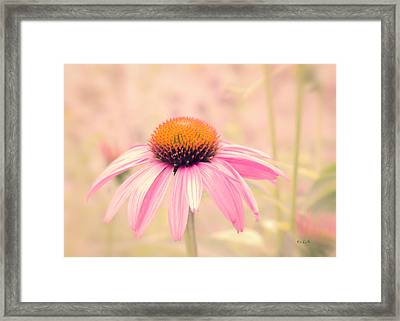 Summer Always Comes Anyway Framed Print