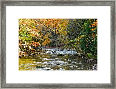 Summer And Autumn Collide Framed Print