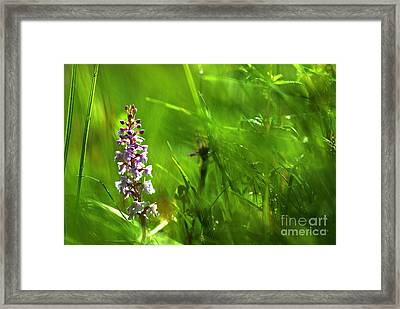 Framed Print featuring the photograph Summer At Grass Roots Level by Kennerth and Birgitta Kullman