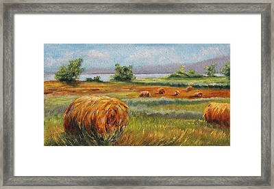 Summer Bales Framed Print by Meaghan Troup