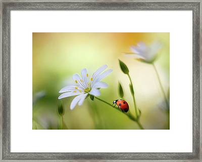 Summer Beauties Framed Print