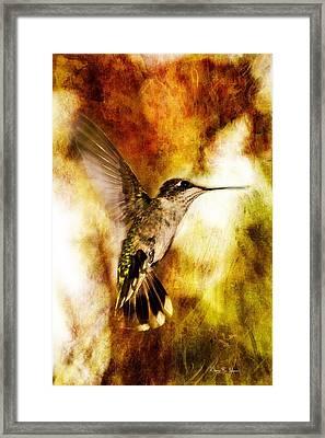 Hummingbird - In Flight - Summer Beauty Framed Print by Barry Jones