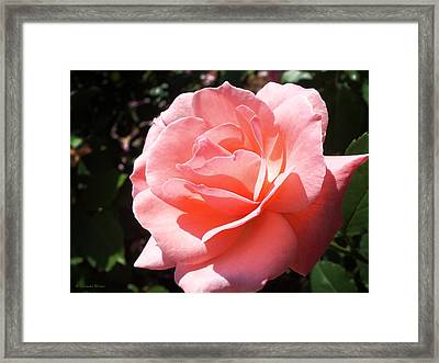 Summer Beauty Framed Print by Lucinda Walter