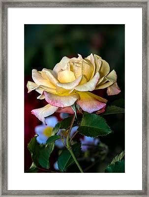 Summer Beauty Framed Print