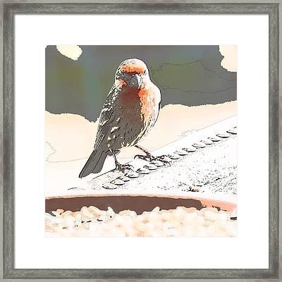 Summer Bird Framed Print by Artist and Photographer Laura Wrede