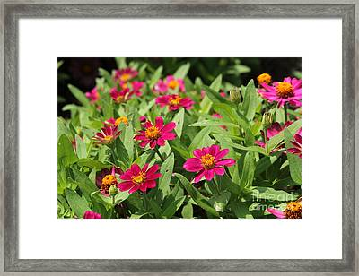 Summer Blossoms Framed Print