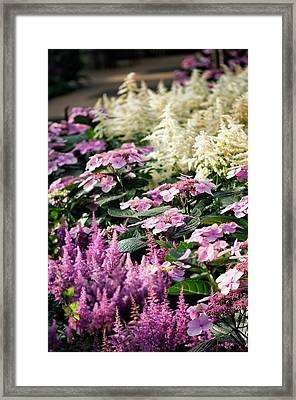 Summer Border Framed Print