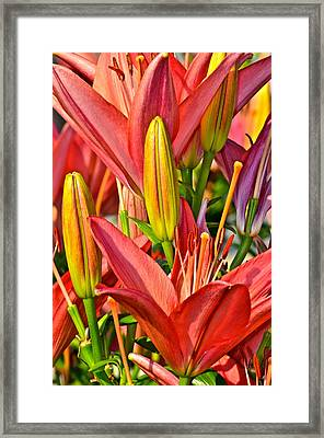Summer Bouquet Framed Print by Frozen in Time Fine Art Photography