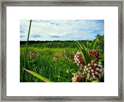 Summer Breeze Framed Print by Zafer Gurel