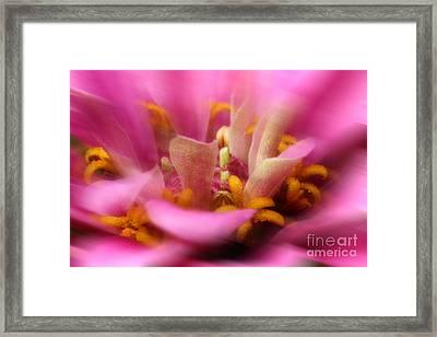 Summer Breezes Framed Print