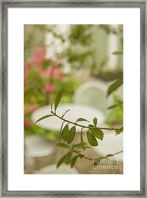 Summer Cafe Framed Print