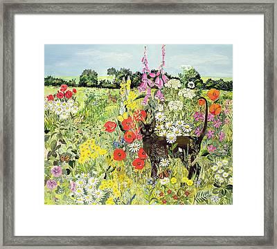 Summer Cat Framed Print