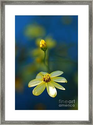 Summer Framed Print by Catherine Lau