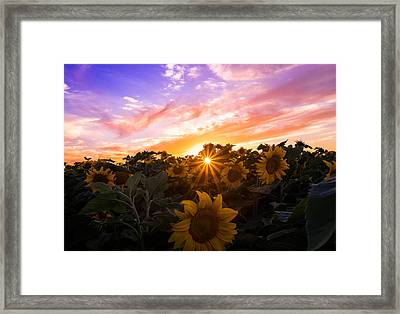 Summer Colors Framed Print