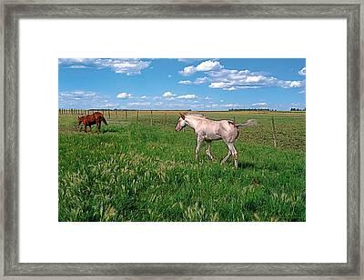 Summer Colt Framed Print by Terry Reynoldson