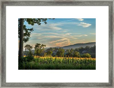 Summer Corn Framed Print by Bill Wakeley