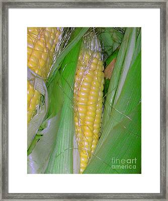 Summer Corn Framed Print