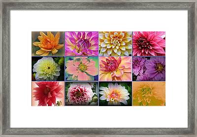 Summer Time Dahlias Framed Print by Dora Sofia Caputo Photographic Art and Design