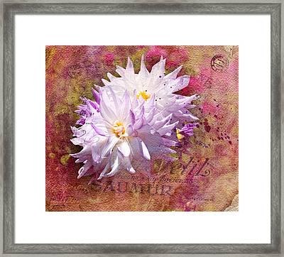 Summer Dahlias Framed Print