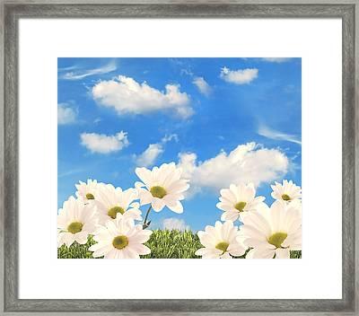 Summer Daisies Framed Print by Amanda Elwell