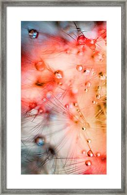 Summer - Dandelion With Water Droplets Abstract Framed Print by Marianna Mills