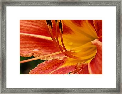 Summer Daylily Framed Print by Julie Andel