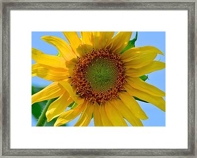 Summer Days Art Here Again Framed Print