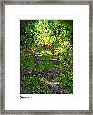 Summer Deer Framed Print