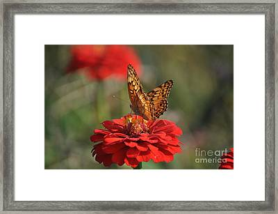 Summer Delights Framed Print