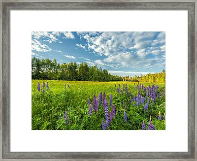 Summer Dream Framed Print