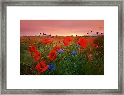 Summer Dream Framed Print by Steffen Gierok