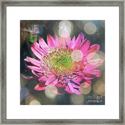 Summer Dreaming Framed Print by Carol Groenen