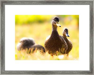 Summer Ducks Framed Print by Bob Orsillo