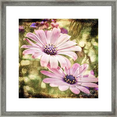 Summer Feeling Framed Print