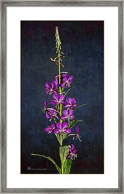 Summer Fireweed Framed Print