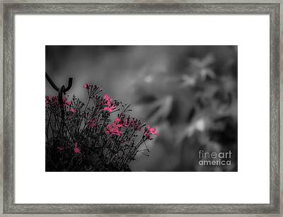 Framed Print featuring the photograph Summer Fleeing by Brenda Bostic
