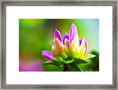 Summer Fleur Framed Print