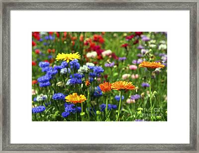 Summer Flowers Framed Print by Elena Elisseeva