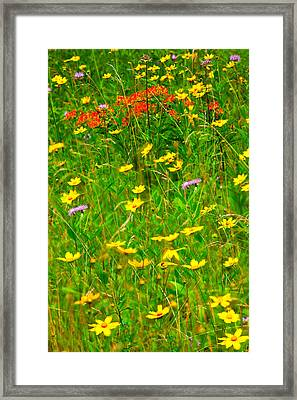 Summer Flowers On The Blue Ridge Parkway I Framed Print by Dan Carmichael