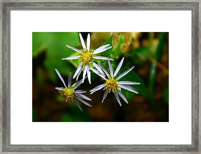 Summer Flowers Framed Print