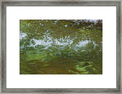 Summer Freshness - Featured 3 Framed Print by Alexander Senin