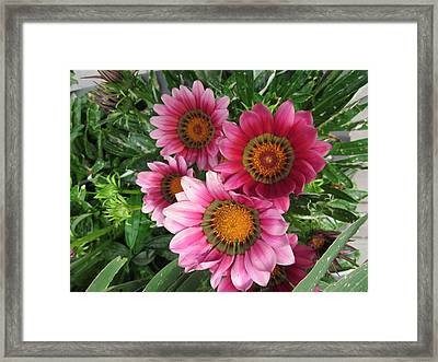 Summer  Full-blown Framed Print
