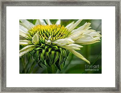 Summer Garden 1 Framed Print by Susan Cole Kelly Impressions