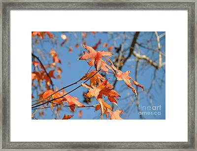 Summer Gold Leaf Framed Print by Gandz Photography