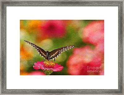 Summer Grace Framed Print by Darren Fisher