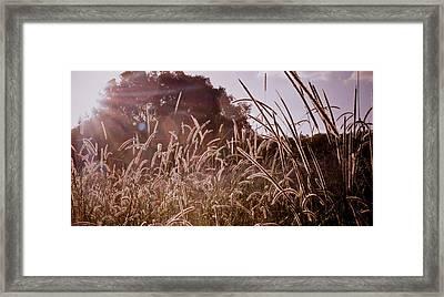 Summer Grasses Framed Print