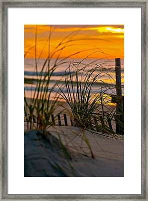 Summer Grasses Framed Print
