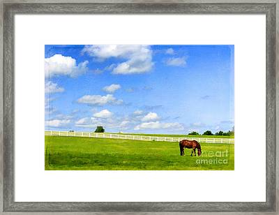 Summer Grazing Framed Print