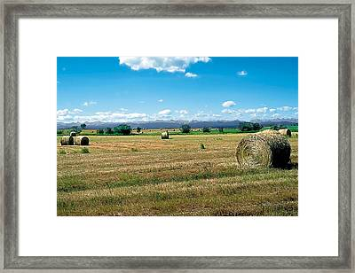 Summer Hay 2 Framed Print by Terry Reynoldson